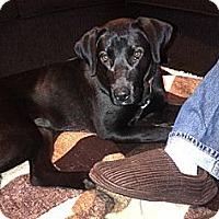 Adopt A Pet :: Shantel - Hamilton, ON