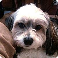 Adopt A Pet :: Riley - Douglas, MA