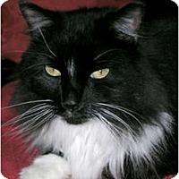 Adopt A Pet :: Sylvester - Lakeland, FL