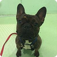 Adopt A Pet :: Joaquin - New York, NY