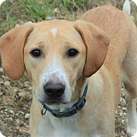 Adopt A Pet :: Leonard - Hagerstown, MD