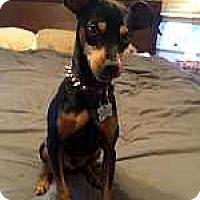 Adopt A Pet :: Obie - Oceanside, CA