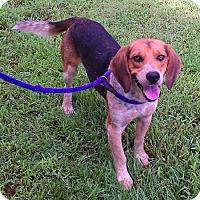 Adopt A Pet :: Tucker - Metamora, IN