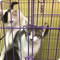 Adopt A Pet :: Freckles - Richboro, PA