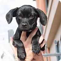 Adopt A Pet :: Charlotte - Folsom, LA