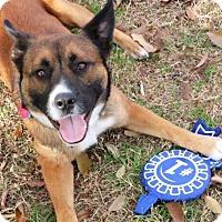 Adopt A Pet :: Kojack - Austin, TX