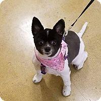 Adopt A Pet :: Foxxie - Rockford, IL