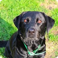 Adopt A Pet :: Betty - Shreveport, LA