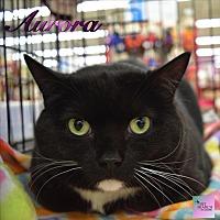 Adopt A Pet :: Aurora - Washington, PA