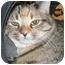 Photo 4 - Domestic Shorthair Kitten for adoption in Ottawa, Ontario - Paloma