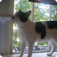 Adopt A Pet :: SYLVESTER - Cleveland, TN