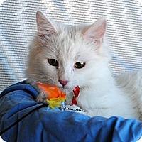 Adopt A Pet :: Drew - Palmdale, CA