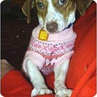 Adopt A Pet :: Sally - cedar grove, IN