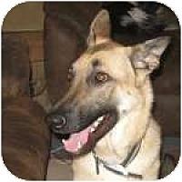 Adopt A Pet :: Neiko - Colorado Springs, CO