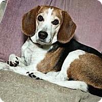 Adopt A Pet :: Carter K - Phoenix, AZ