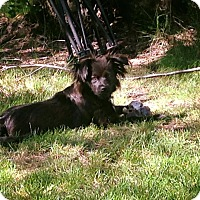 Adopt A Pet :: Xander - Edmonton, AB