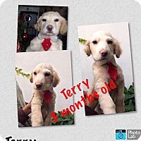 Adopt A Pet :: Terry - LAKEWOOD, CA