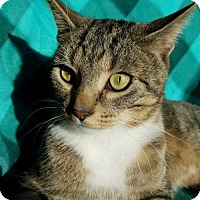 Adopt A Pet :: Ripple - Hornell, NY