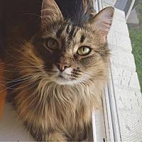Adopt A Pet :: AR - Rosetta (CP) - Lambertville, MI