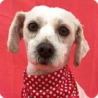 Adopt A Pet :: PALOMA - San Diego, CA