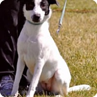Adopt A Pet :: Molly - Avon, NY