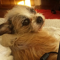 Adopt A Pet :: Howard - Ball Ground, GA