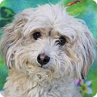 Adopt A Pet :: HENDERSON/Neutered - Red Bluff, CA