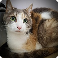 Adopt A Pet :: Glee - Salisbury, MA