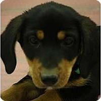 Adopt A Pet :: Lafayette - Broomfield, CO