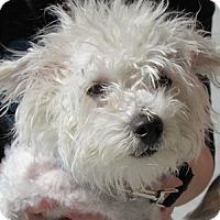 Adopt A Pet :: Alfredo - Gilbert, AZ