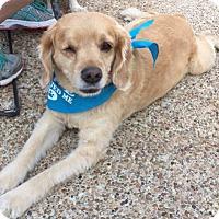 Adopt A Pet :: Tucker - Sugarland, TX