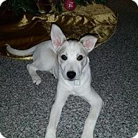 Adopt A Pet :: Aspen - Saskatoon, SK