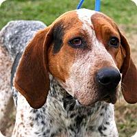 Adopt A Pet :: Chance - Erwin, TN