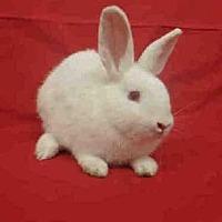 Adopt A Pet :: SCOTTY - Los Angeles, CA