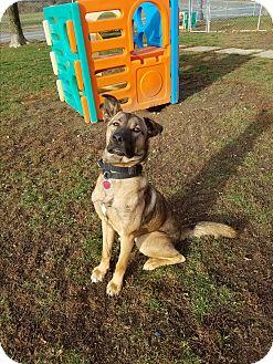 German Shepherd Dog/Hound (Unknown Type) Mix Puppy for adoption in New Windsor, New York - JUNIOR