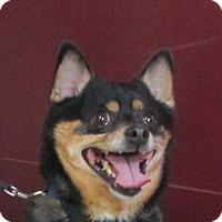 Adopt A Pet :: Murtaugh - LaGrange, KY