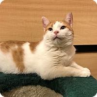 Adopt A Pet :: Gia - Barrington Hills, IL