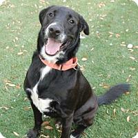 Adopt A Pet :: columbus - Bradenton, FL