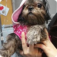 Adopt A Pet :: Sapphire - Huntsville, AL