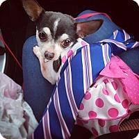 Adopt A Pet :: Coco - Sugar Grove, IL