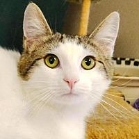 Adopt A Pet :: Berni - Hollywood, MD