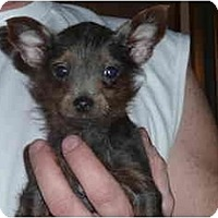 Adopt A Pet :: Lucky- Adopted - Grove City, OH