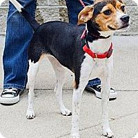 Adopt A Pet :: Jordi - Hastings, NY
