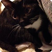 Adopt A Pet :: Keeche - Woodland Hills, CA
