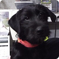 Adopt A Pet :: Jerry - Geneseo, IL