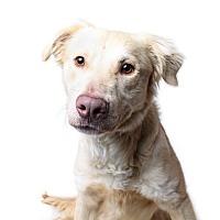 Adopt A Pet :: Elton - Wilmington, DE