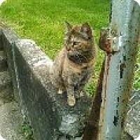 Adopt A Pet :: Evie - Delmont, PA