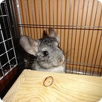 Adopt A Pet :: Ramsey - Titusville, FL