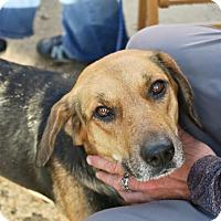 Adopt A Pet :: Margo - Minneapolis, MN