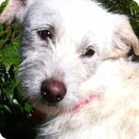 Adopt A Pet :: Jenna-ADOPTIO PENDING - Boulder, CO